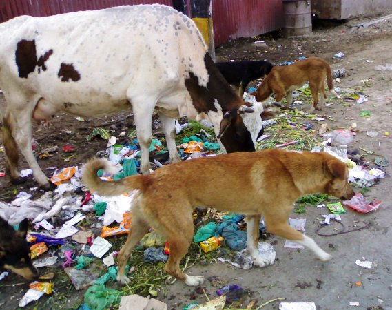 Polythene & Animals