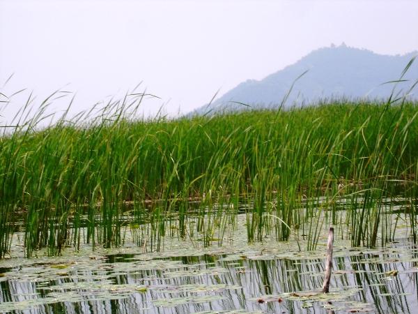 vegetation inDal